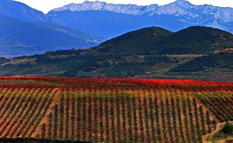 Viñas en La Rioja