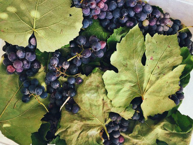 ¿Qué son los taninos en el vino?