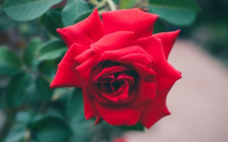 rosales-vinedo