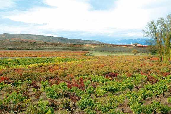 Viñas Rioja