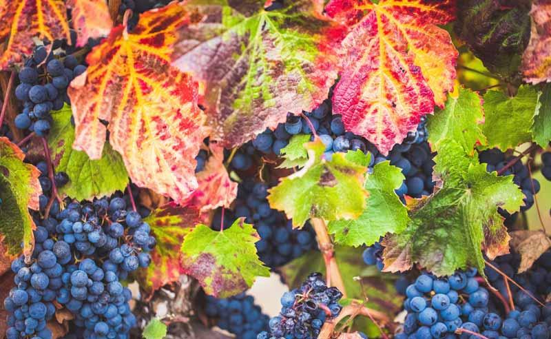 Cosecha Rioja
