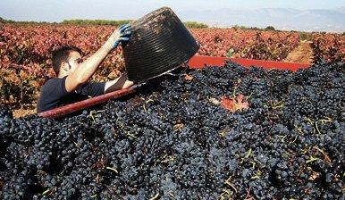 Nuestros Vinedos