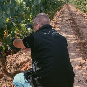 Vendimia Rioja 2019 II
