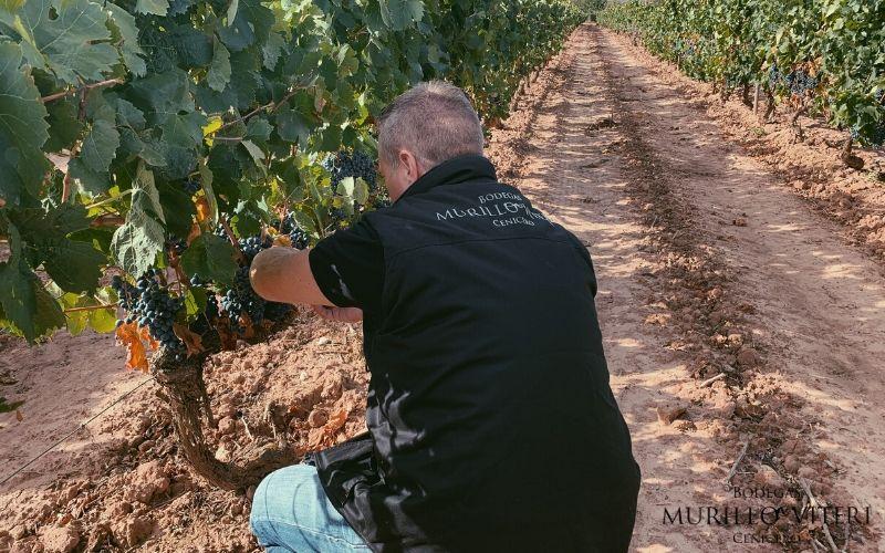 vendimia-de-Rioja-2019